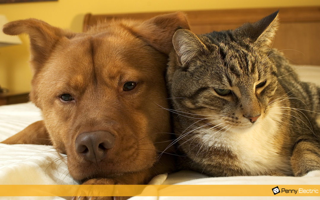 6 Ways to Protect Your Pets From Electrical Hazards